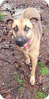 Shepherd (Unknown Type) Mix Dog for adoption in Ruston, Louisiana - Paige