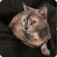 Adopt A Pet :: Coda - Novato, CA