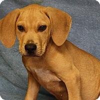 Adopt A Pet :: Sebastian - Joplin, MO