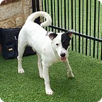 Adopt A Pet :: Troy - Redmond, WA