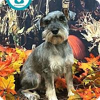 Adopt A Pet :: Walter - Kimberton, PA