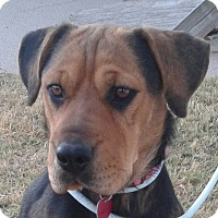 Adopt A Pet :: Carrington - Manhattan, KS
