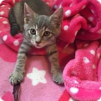 Adopt A Pet :: Precious - Clarkson, KY