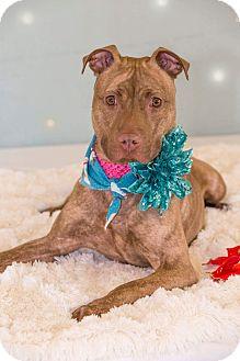 Terrier (Unknown Type, Medium) Mix Dog for adoption in Flint, Michigan - Tess