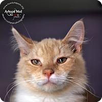 Adopt A Pet :: DaVinci - Lyons, NY