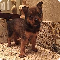 Adopt A Pet :: Kinara - Sacramento, CA