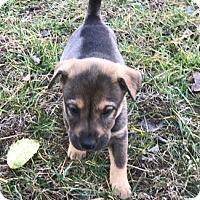 Adopt A Pet :: Bria - Holly Springs, NC