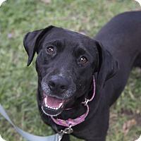 Adopt A Pet :: Sadie - Houston, TX