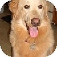 Adopt A Pet :: Henley - Yorktown, VA