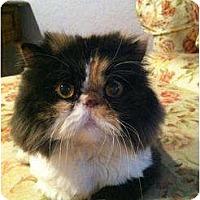 Adopt A Pet :: Grier - Beverly Hills, CA