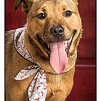 Adopt A Pet :: Riley - Owensboro, KY