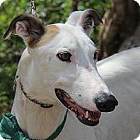Adopt A Pet :: Ice - Brandon, FL