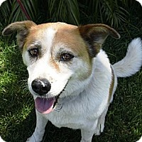 Adopt A Pet :: Grace - Corona, CA