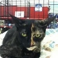 Adopt A Pet :: Melissa - Riverside, RI
