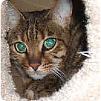 Adopt A Pet :: Kahiva - Dallas, TX