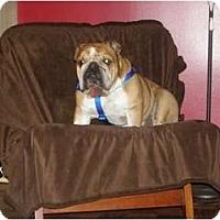 Adopt A Pet :: Boudreaux - Winder, GA