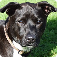 Adopt A Pet :: Angelo - Huntley, IL