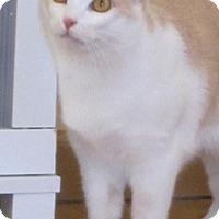 Adopt A Pet :: Charlie - Prescott, AZ