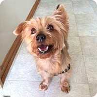 Adopt A Pet :: Peanut - Sheboygan, WI