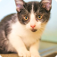 Adopt A Pet :: Crackle - Larned, KS