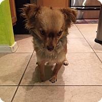 Adopt A Pet :: Dixon - Tucson, AZ