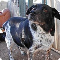 Adopt A Pet :: Brooke - Glendale, AZ