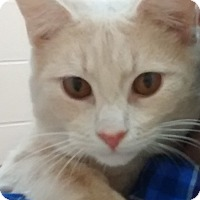 Adopt A Pet :: Fitzgerald - Covington, KY