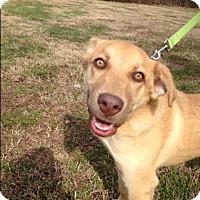 Adopt A Pet :: Jackson (ETAA) - Plainfield, CT