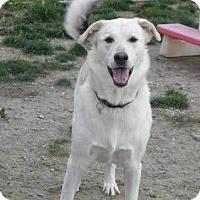 Adopt A Pet :: phantom - Saskatoon, SK