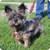 Adopt A Pet :: Scooter - Elyria, OH