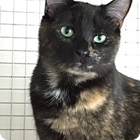 Adopt A Pet :: Sprinkles - Trevose, PA