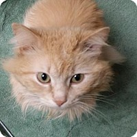 Adopt A Pet :: Reese - Chicago Heights, IL