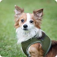 Adopt A Pet :: Colby - Daleville, AL
