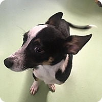 Adopt A Pet :: Oliver - Gadsden, AL
