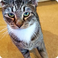 Adopt A Pet :: Cape May - Salisbury, MA