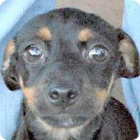 Adopt A Pet :: Baby Rosemarie - Oakley, CA