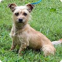 Adopt A Pet :: Duke(8 lb) Sweetest On Earth! - Williamsport, MD