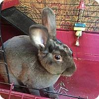 Adopt A Pet :: Dodge - Aurora, IL