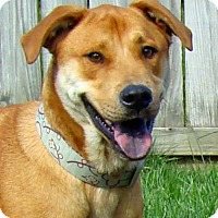 Adopt A Pet :: Brody - Greenfield, IN