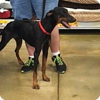 Adopt A Pet :: Brennan - Omaha, NE