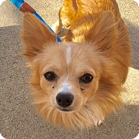 Adopt A Pet :: Jack - Nashville, TN