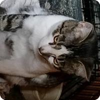 Adopt A Pet :: ZOOT - Millerstown, PA