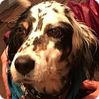 Adopt A Pet :: MAYFLOWER - Pine Grove, PA