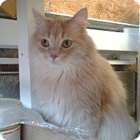 Adopt A Pet :: Moody - Vancouver, BC