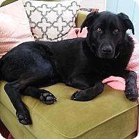 Adopt A Pet :: Bruce - Minneapolis, MN