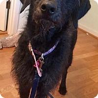 Adopt A Pet :: Kuna - Pittsburg, CA