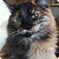 Adopt A Pet :: Cutie Pie - Winchester, CA