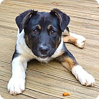 Adopt A Pet :: *Penny - PENDING - Westport, CT