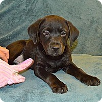Adopt A Pet :: Anna - Homewood, AL