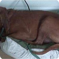 Adopt A Pet :: Lucky - Carrollton, GA